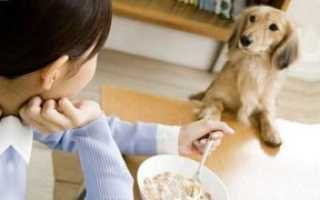 Что едят собаки