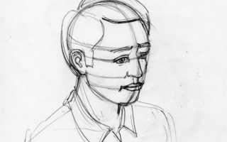 Как пропорционально правильно нарисовать лицо человека