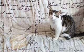 Как отучить кошку гадить на диван