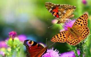 Что отражают правила экологических пирамид