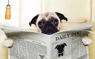 Как лечить жидкий стул у собаки