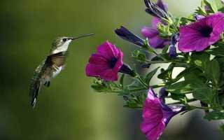 Какая птица способна летать задом