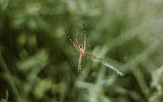 Какими способностями обладает Человек паук