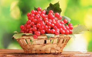 Ягоды калина красная полезные свойства и противопоказания