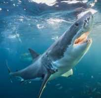 Сколько существует видов акул