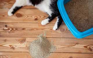 Что делать если кот ходит мимо лотка