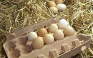 Сколько можно хранить индюшиные яйца в холодильнике