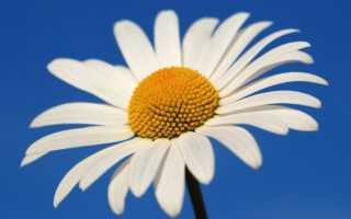 Какой цветок соответствует имени Людмила