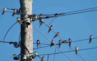 Почему птиц на проводах не бьет током