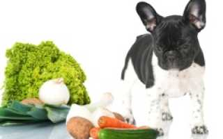 Можно ли собакам болгарский перец