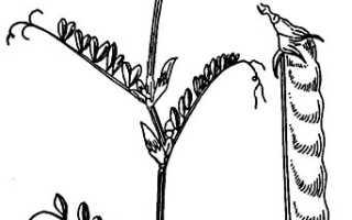 Что относится к многолетним травам