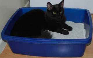 Чем вывести запах кошачьей мочи с линолеума