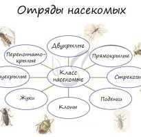 Кто относится к насекомым с неполным превращением