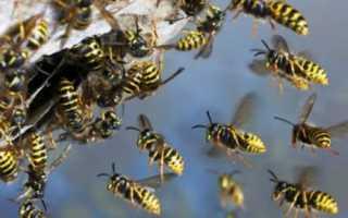 Как избавиться от пчёл на даче