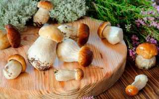 Как вырастить грибы дома на подоконнике
