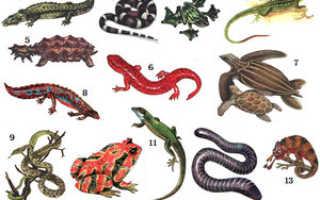 Сколько видов пресмыкающихся на земле
