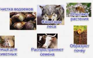 Какая роль животных в природе