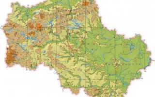 Какие животные обитают в Московской области