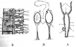 Какие из морских кишечнополостных являются хищниками