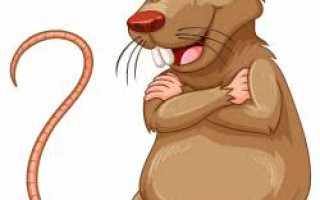 Какие есть сказки про мышку