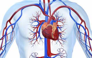 Какое значение имеет коронарная кровеносная система