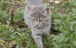 Как назвать котёнка мальчика серого цвета