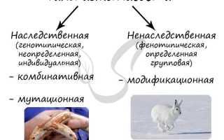 Что послужило причиной исследования изменчивости организмов