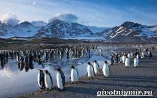 Какие животные приспособились к жизни в Антарктиде